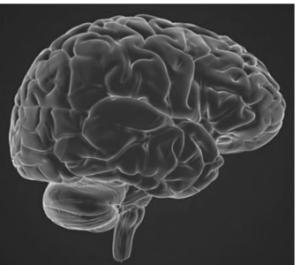 Brain CNS
